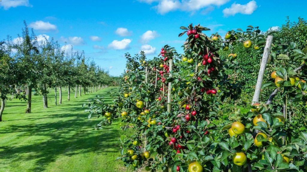Как повысить урожайность сада